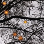 christmas stars by Flickr user mararie (Creative Commons license)